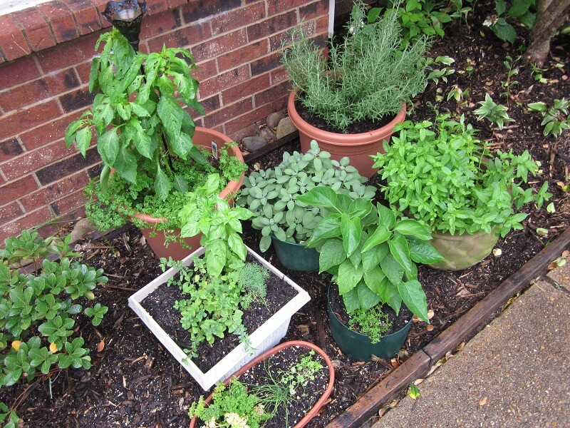 7 - In House Herb Garden