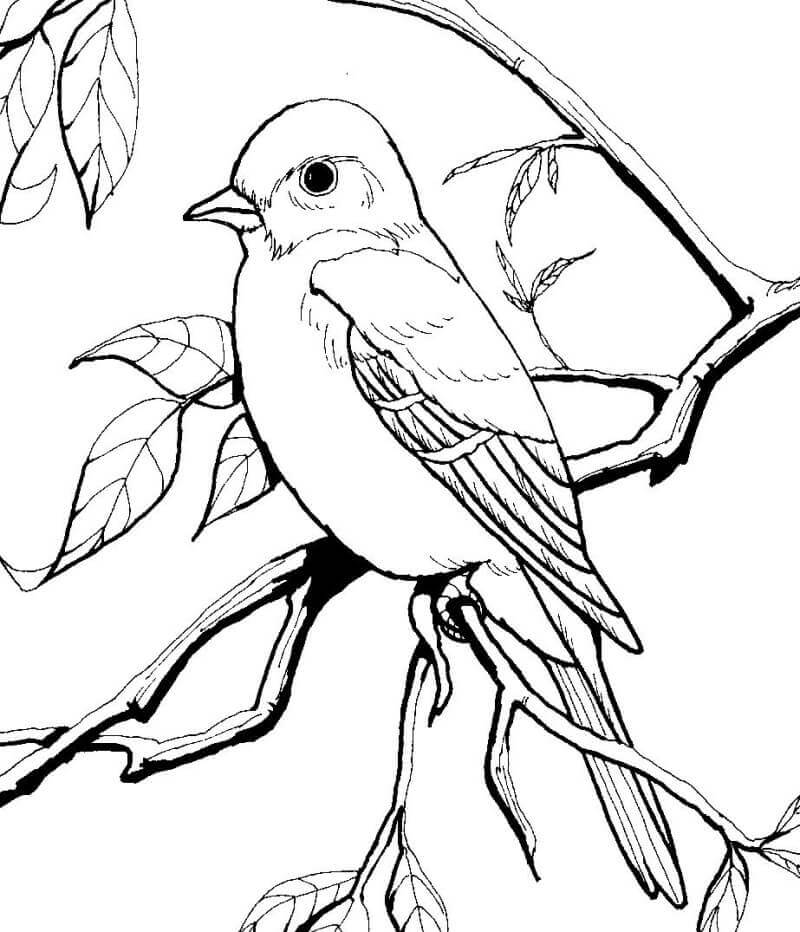 Bird Watching Coloring Pages Coloring Pages